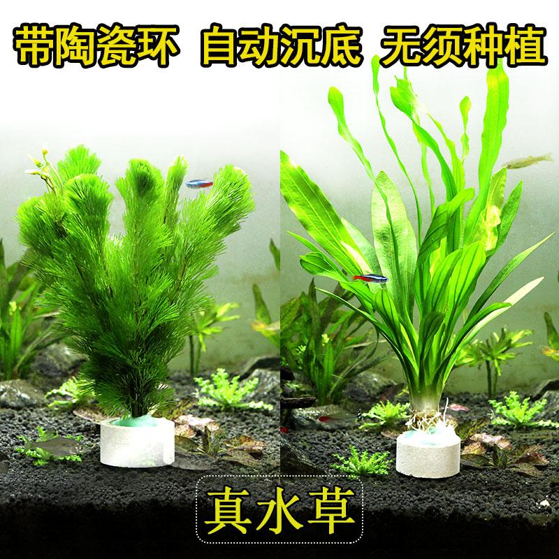 Наполнение для аквариума Артикул 607673238120