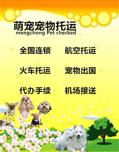 全国连锁宠物航空托运 火车托运广州 深圳 上海 北京猫狗随机空运