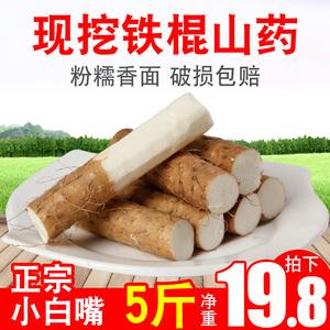 铁棍山药新鲜5斤蔬菜小白嘴垆土姜薯紫色淮山药麻山药片包邮