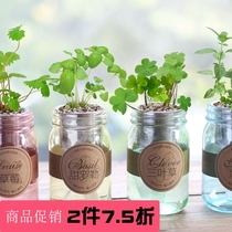 Ecoey Hydroponic Creative Green plant indoor potted DIY office mini cute children potted micro landscape