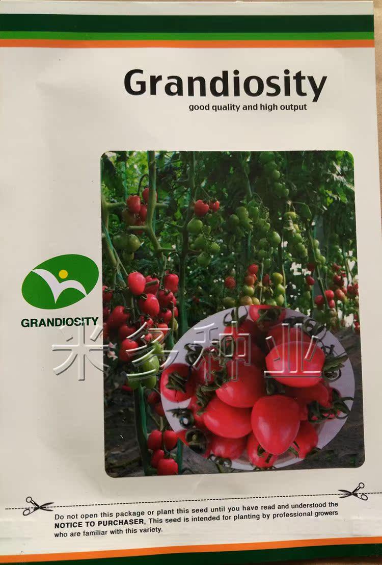 美粉一号 高端粉果樱桃番茄圣女果种子迷你小西红柿水果蔬菜