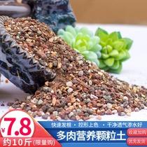 多肉植物营养土透气纯颗粒肉肉种植专用叶插土壤泥炭通用型铺面石
