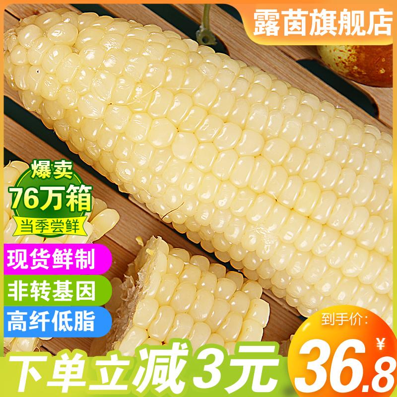 减3元露茵糯玉米新鲜甜糯粘玉米棒真空包装非转基因水果现摘10根