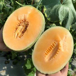 海南西州蜜瓜5斤装哈密瓜新鲜一箱当季应季水果整箱香甜瓜网纹瓜