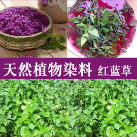 买二送一广西五色糯米饭紫色花米饭植物染料紫蓝草红蓝草紫色500g