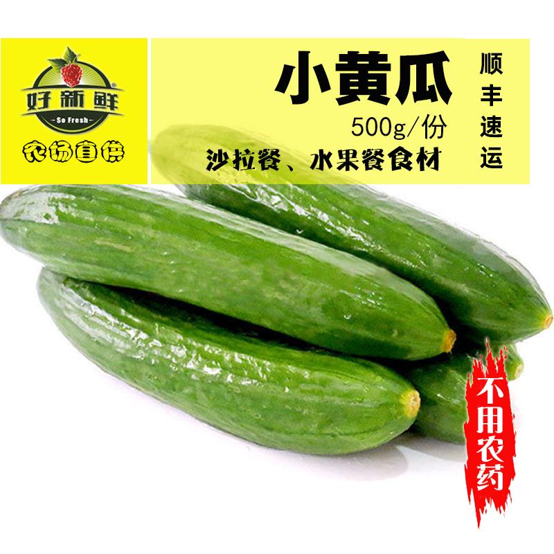 新鲜水果黄瓜蔬菜日本荷兰甜嫩脆荷兰小青瓜沙拉西餐孕妇生吃500g
