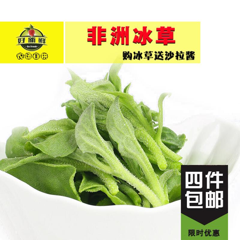好新鲜蔬菜 新鲜冰草冰菜新鲜沙拉蔬菜生菜西餐400g 4件顺丰包邮