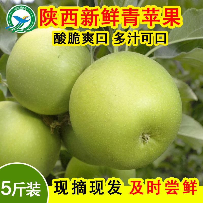 现摘现发青苹果水果孕妇儿童新鲜酸脆应季吃的5斤装整箱批发包邮