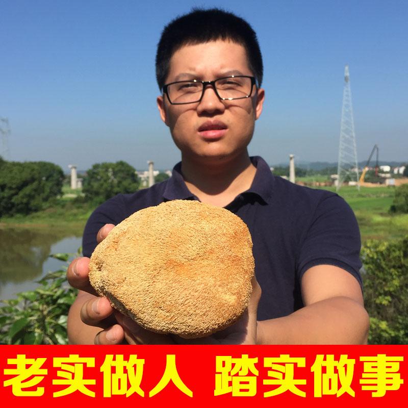 猴头菇干货非东北野生对胃好的猴头菇粉农家自产小肖家猴菇250g