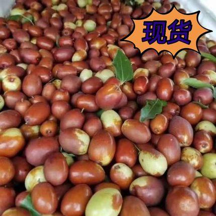 沧州献县伊甸园鲜枣应季水果金丝小枣脆枣现摘新鲜水果特产鲜枣