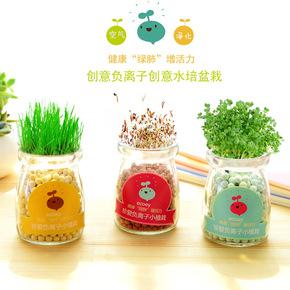 水培植物玻璃瓶办公室桌面绿植水生花卉迷你小盆栽防辐射净化空气