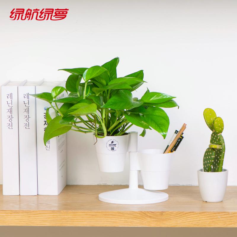 绿航绿萝盆栽室内办公桌面创意绿植自动吸水吸甲醛净化空气