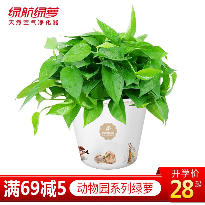 绿航动物系列绿萝植物盆栽室内吸甲醛净化空气绿植好养常绿大绿箩