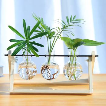 护眼水培植物水养桌面摆件玻璃瓶