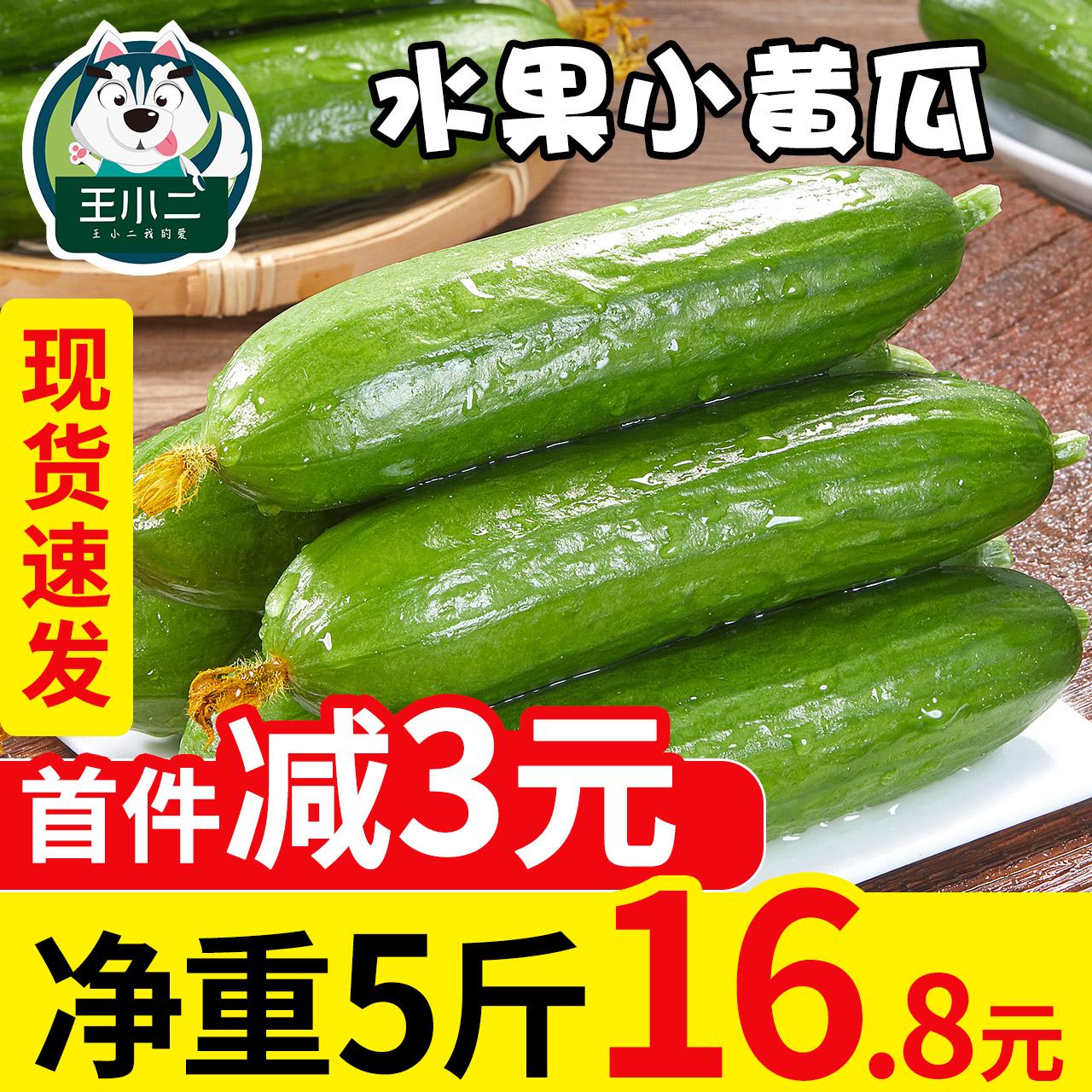 水果黄瓜新鲜包邮5斤小黄瓜小青瓜荷兰瓜时令蔬菜山东旱生吃整箱