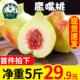 王小二 云南鹰嘴桃水果新鲜当季整箱桃子脆蜜桃5斤包邮甜水密桃
