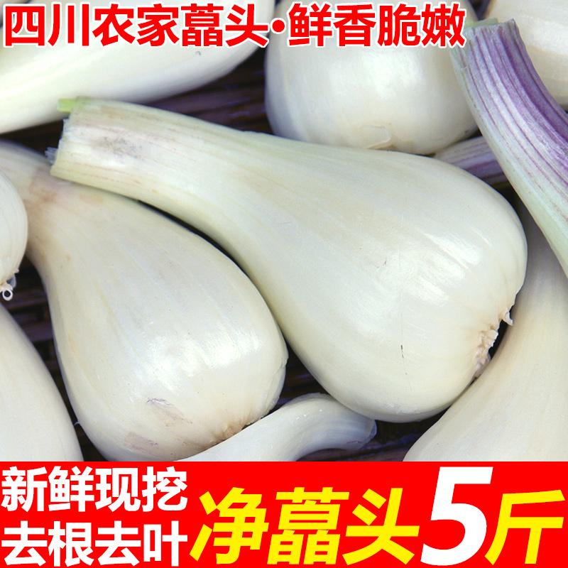 现挖当季特产�头5斤茭头新鲜蔬菜叫头农家自种小蒜茭白糖醋荞头