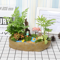 Moss Micro landscape combination plant Ecological bottle potted Office desktop Green Flower Creative Plant Gifts