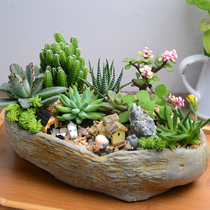Multi-meat plant combination potted pot DIY desktop green meat meat Novice package contains basin creative indoor micro landscape