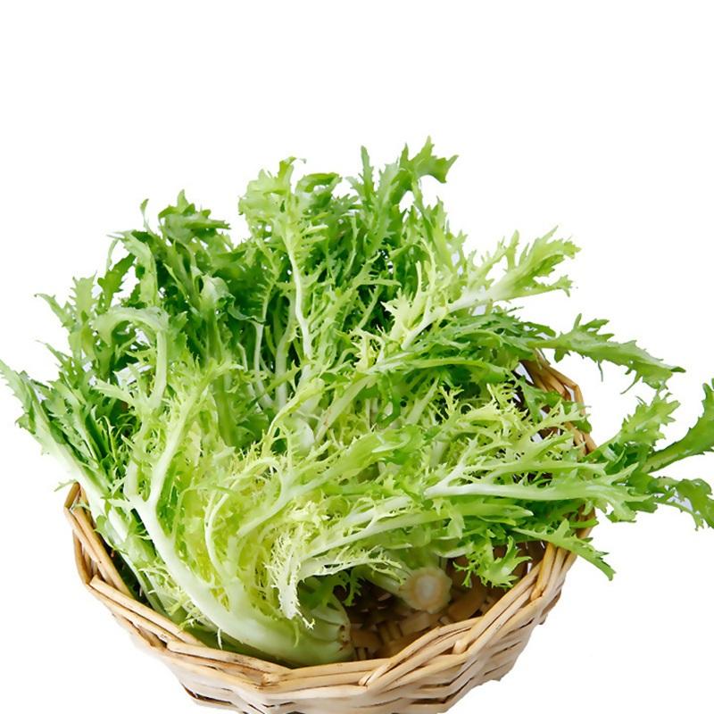 密云农家种植苦菊新鲜蔬菜苦叶生菜苦细叶狗牙菜苦苣沙拉300g