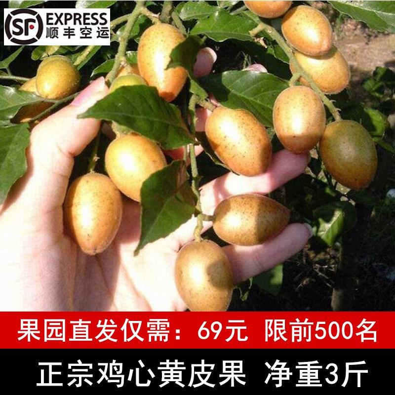 已过季 勿下单广东茂名高州新鲜鸡心黄皮果孕妇水果3斤顺丰包邮
