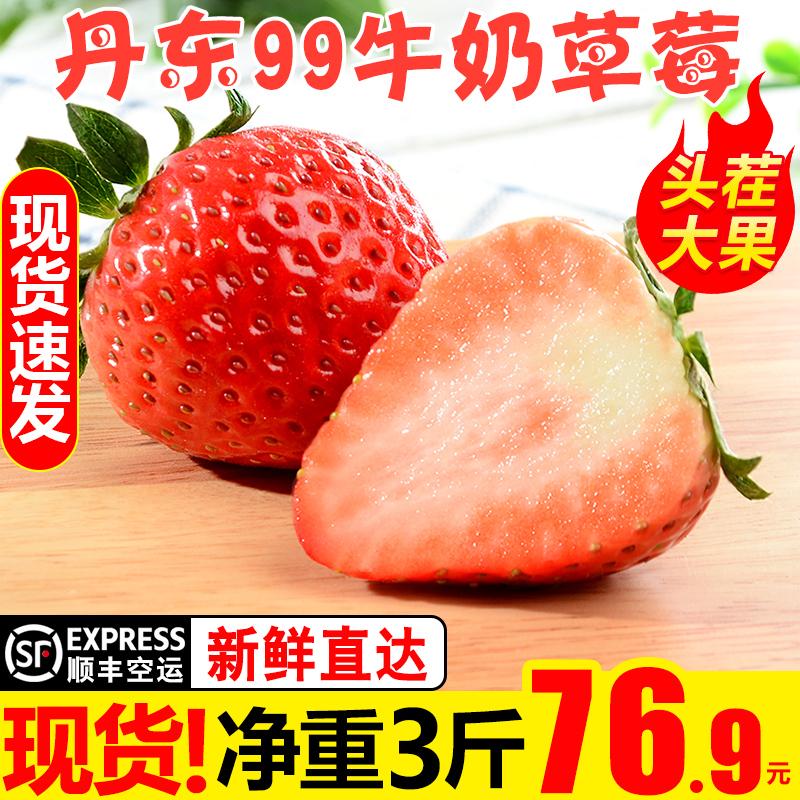 甘福园 丹东99牛奶草莓3斤新鲜当季水果四季奶油红颜大草莓5包邮