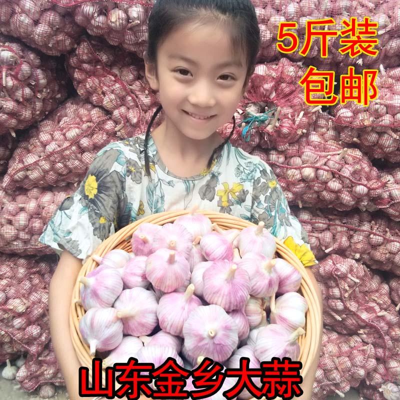 干蒜大蒜头新鲜山东金乡新蒜5斤低价包邮农家自种紫白皮大蒜