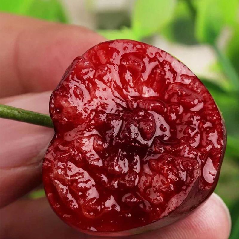 山东烟台特级美早大樱桃2斤顺丰包邮 果径≥26mm自家果园现摘现发