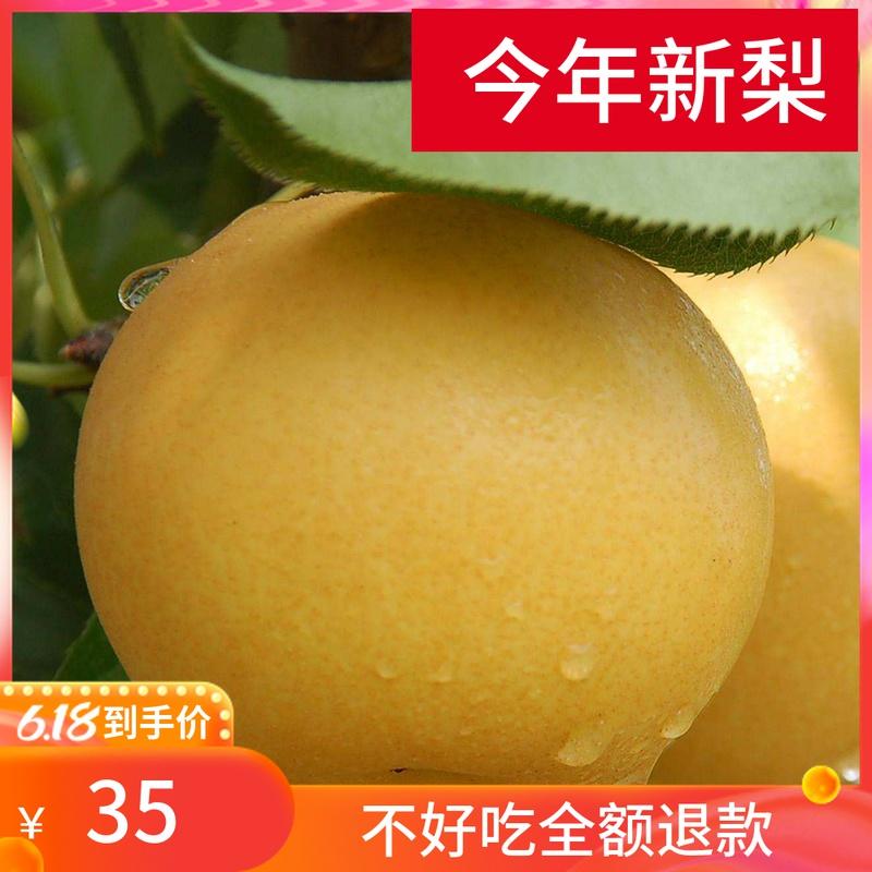 百里洲砂梨新鲜水果10现摘梨子皇冠梨丰水梨黄花梨翠冠梨香梨5斤
