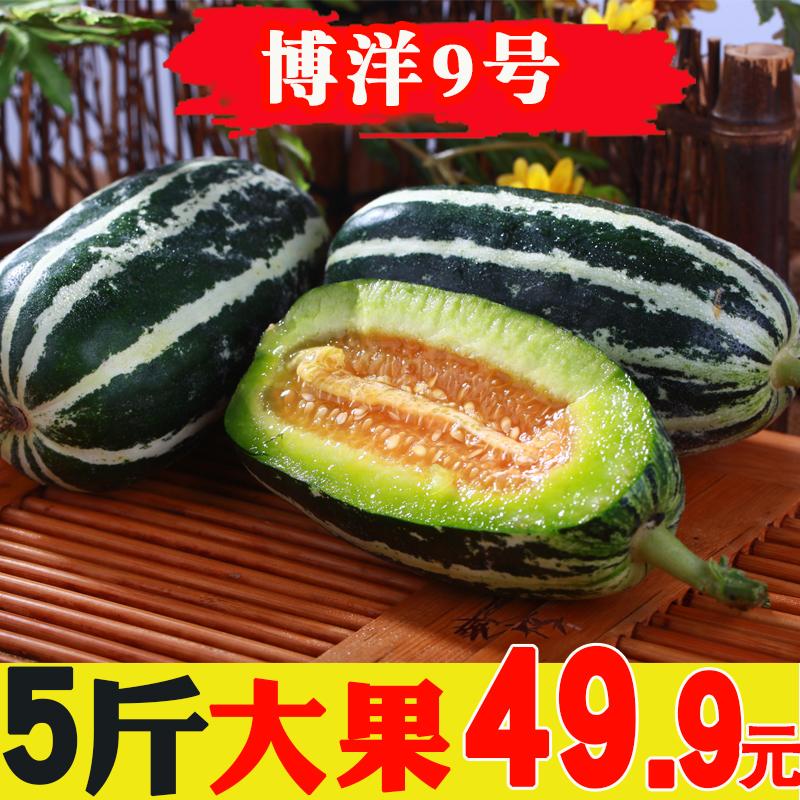 博洋9号甜瓜新鲜当季应季水果带箱5斤整箱批发蜜瓜香瓜羊角蜜甜瓜