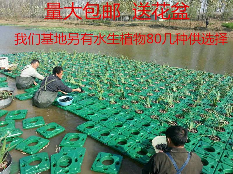 水生緑化浮島栽培人工浮島植物栽培浮床生態浄化水質抗風は20年間使えます。