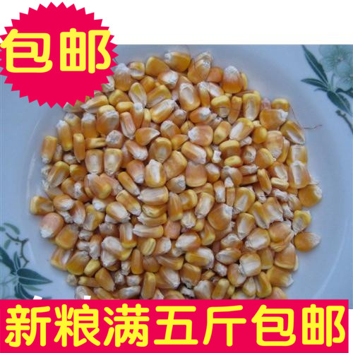 The corn is suitable for birds and animals, good food, 500g, 5 kg, package