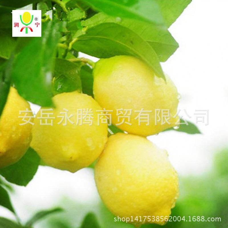 四川安岳尤力克二三级果装黄柠檬12月01日最新优惠