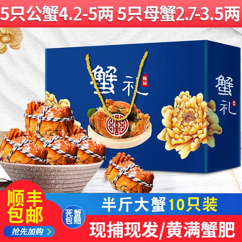 兴化大闸蟹顺丰包邮公4.2-5两母2.7-3.5两共10只螃蟹红膏鲜活现货