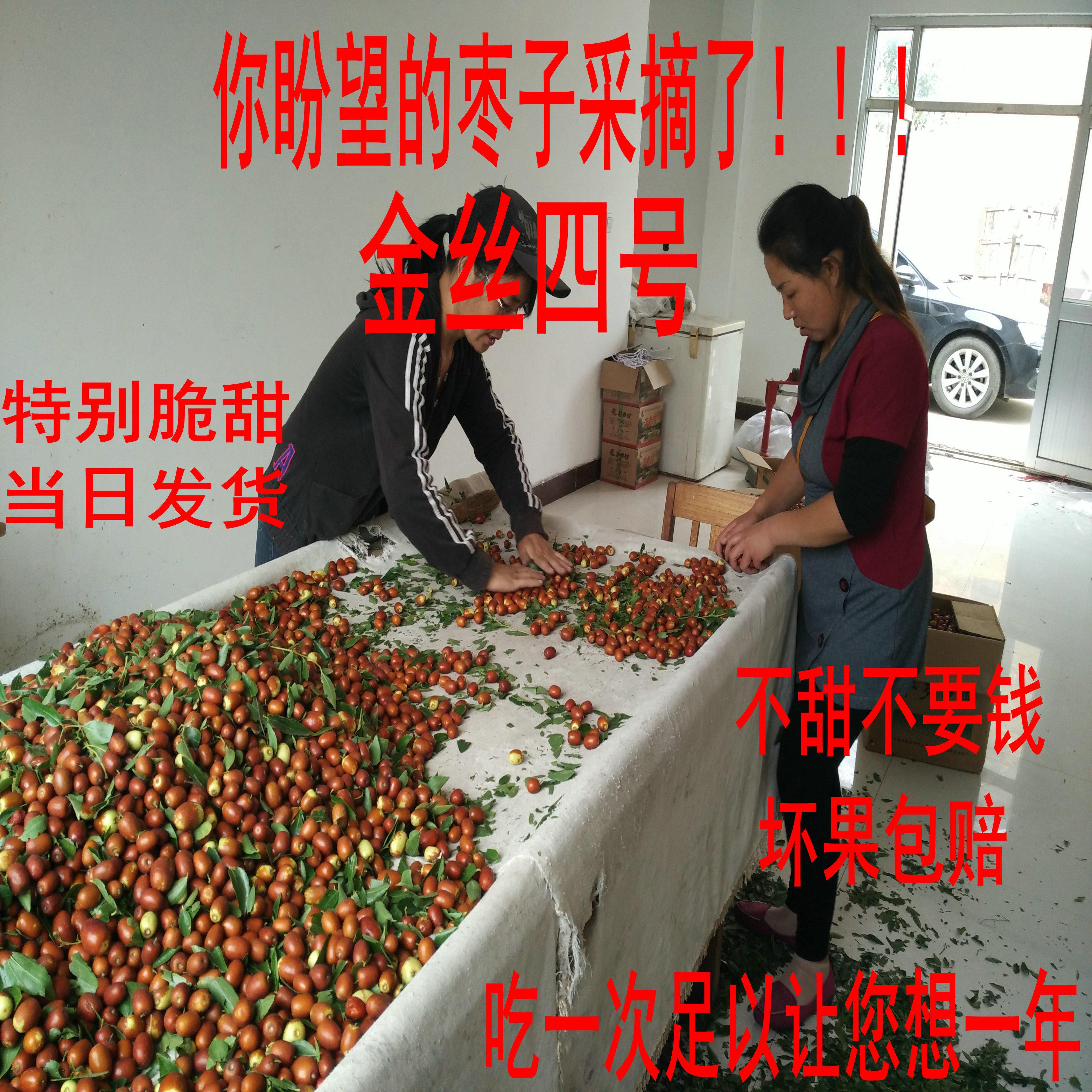 金丝四号鲜枣红枣金丝小枣脆甜脆枣60元五斤包邮