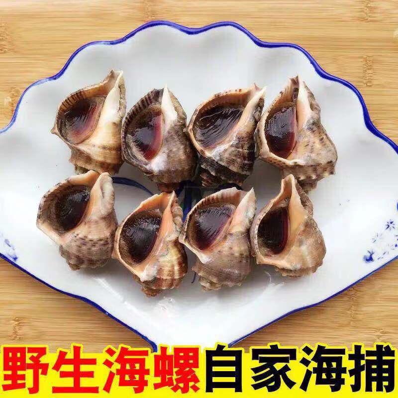 鲜活海螺新鲜蔬菜水果海鲜水产品螺类野生当先现捕现发 生鲜 2斤