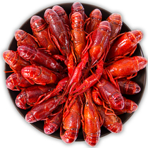 (2nd half price) spicy crayfish cooked food 13 incense Fresh now do 1.8 Jin spicy flavor