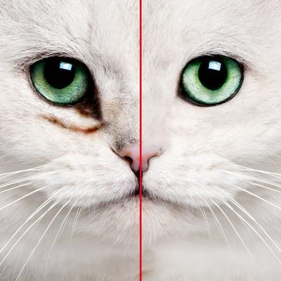 猫滴眼液口碑如何
