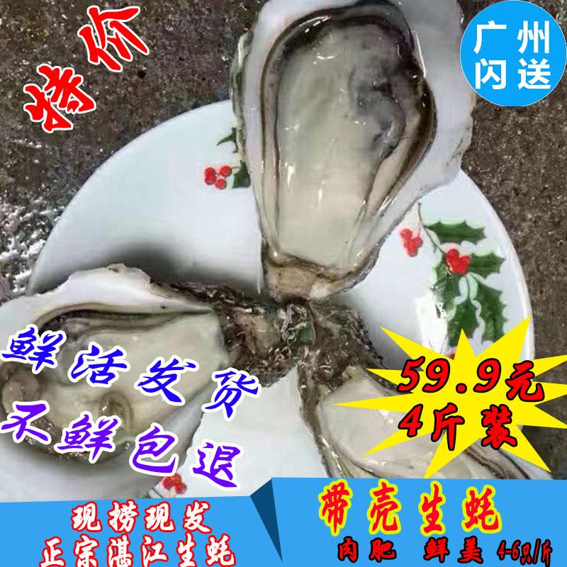 湛江鲜活带壳刺身即食整只新鲜生蚝限时2件3折