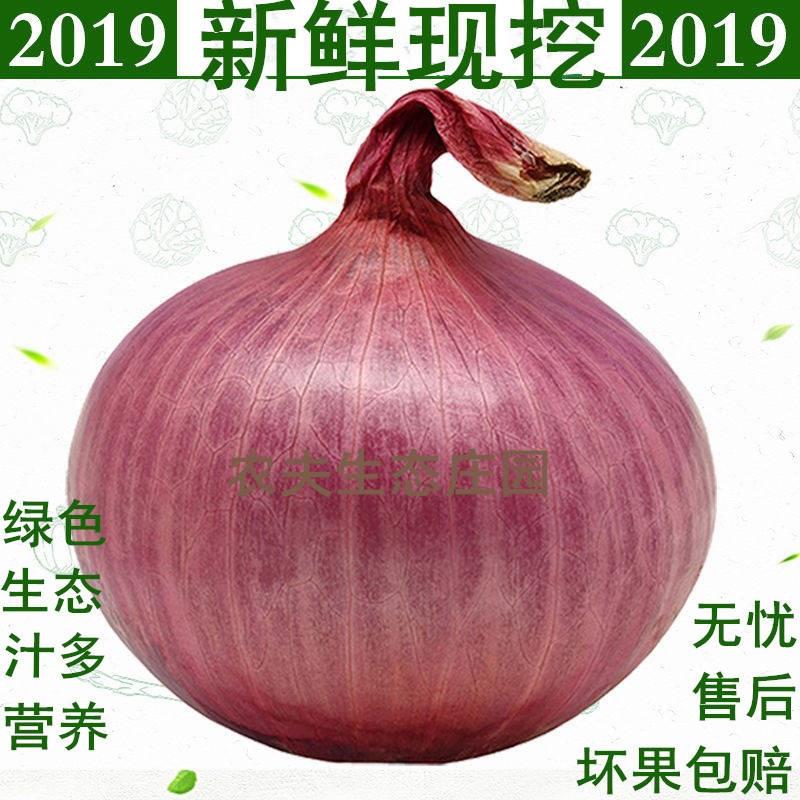 【2019鲜货现挖】鲜紫红皮洋葱5斤包邮农场新鲜蔬菜红皮葱圆葱头