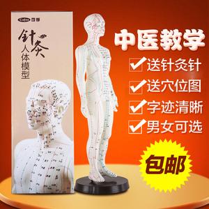 可孚针灸模型医用人体穴位经络模特小人家用中医教学清晰50cm男女