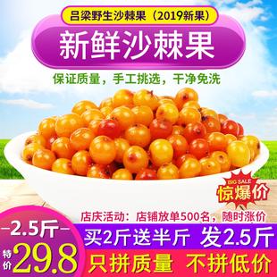 包邮 精选纯天然特级沙棘榨汁酵素 山西特产野生沙棘果新鲜鲜果2斤