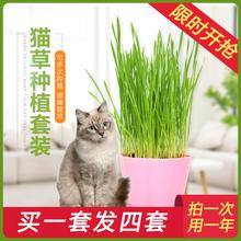 猫草种子除毛球猫零食化毛膏猫薄荷水培种籽种植套装猫咪宠物用品