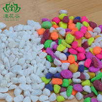 Decorations Multi-meat special color Shi Baishi (stone) flowers green potted plants flower seedlings about 50 grams of meat plant