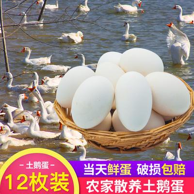 Shandong authentic native goose eggs fresh farmhouse free-range goose eggs when fresh big goose eggs go to pregnant women wholesale 12 packs