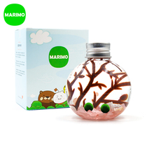 Marimo Magic Ball Ecological bottle happy Seaweed ball DIY mini water cultivation special Christmas New Year gift