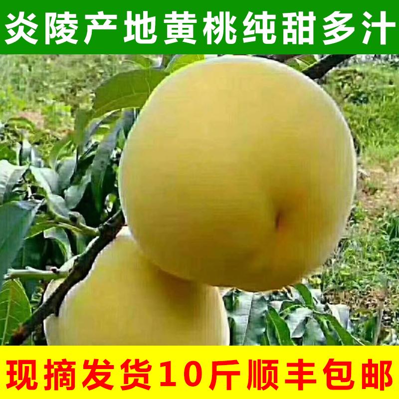 新鲜10斤顺丰当季桃子孕妇湖南黄桃券后229.00元