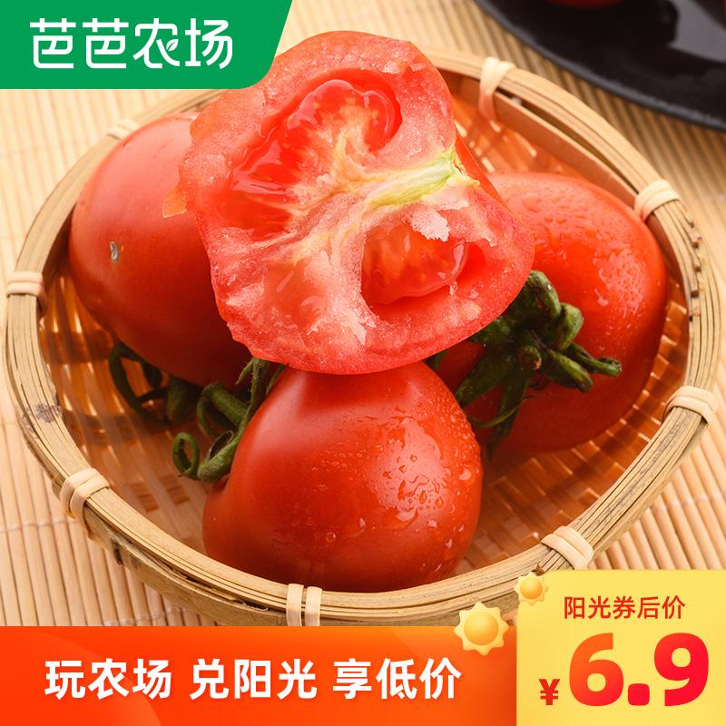 四川攀枝花露天番茄西红柿小番茄新鲜水果生吃蔬菜9斤