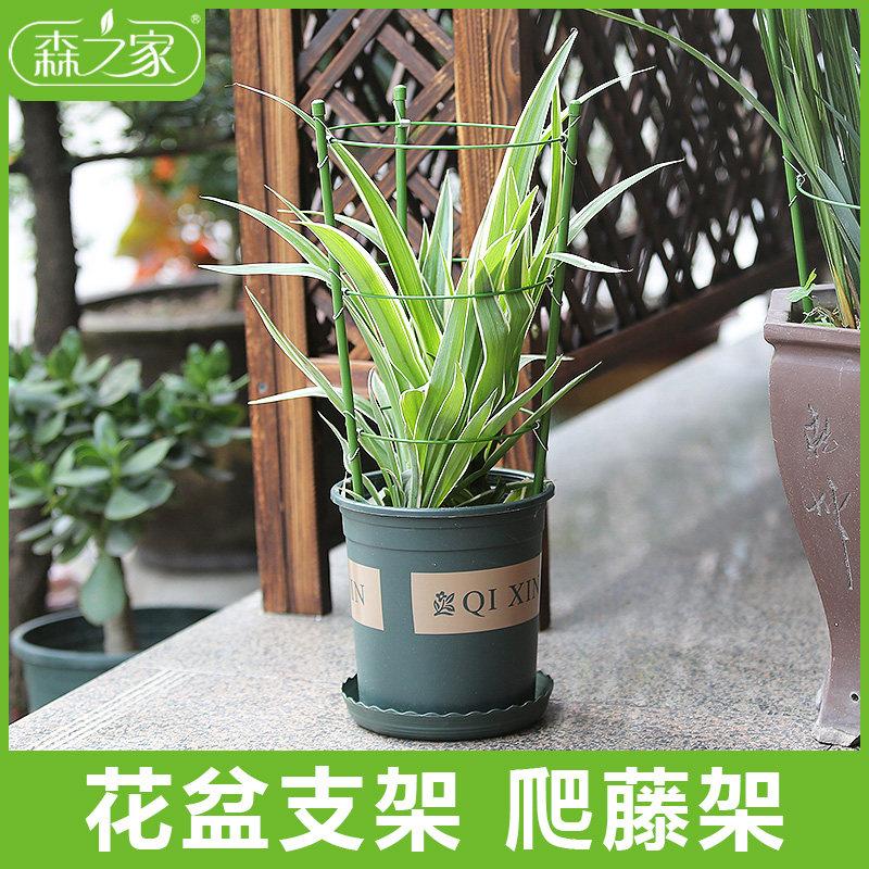 植物爬藤架盆栽固定花支架伸缩绿植花盆铁线莲花支撑爬藤户外攀爬