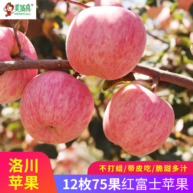 Luochuan Apple Shaanxi Red Fuji Apple fresh apple 12 pieces 75 fruit gift box